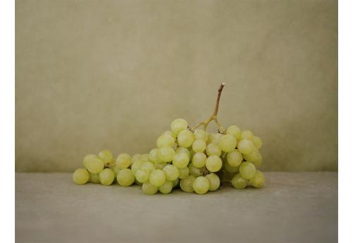 L'élégance du raisin