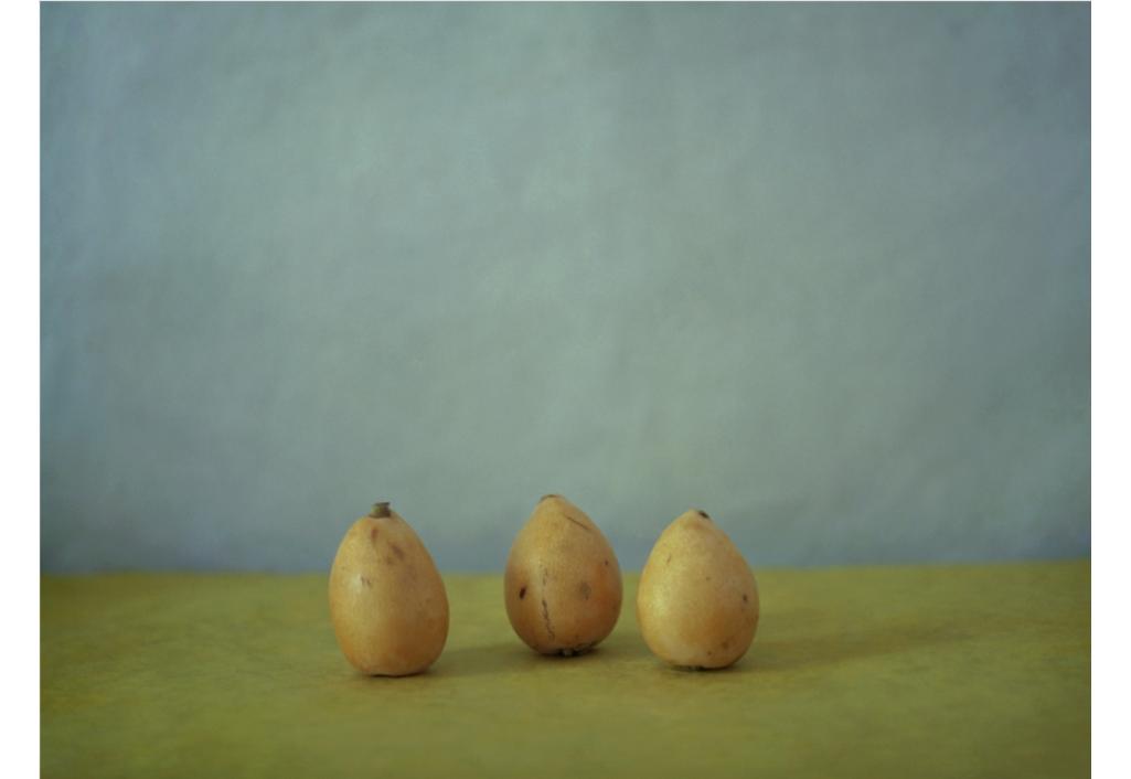 Trois nèfles, un matin d'été